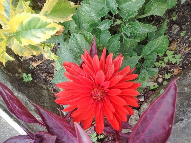 庭院街道波哥大完善的红色 图库摄影