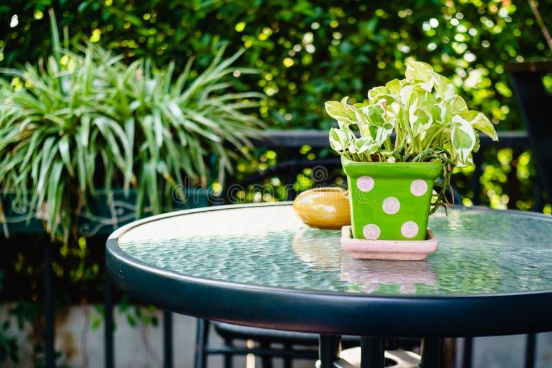 庭院装饰-罐花瓶和烟灰缸的金黄pothos厂 图库摄影