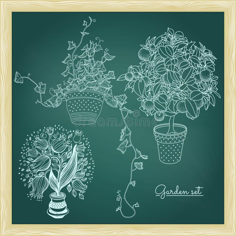 庭院设置与花盆的3棵植物:会开蓝色钟形花的草、蜜桔和i 向量例证