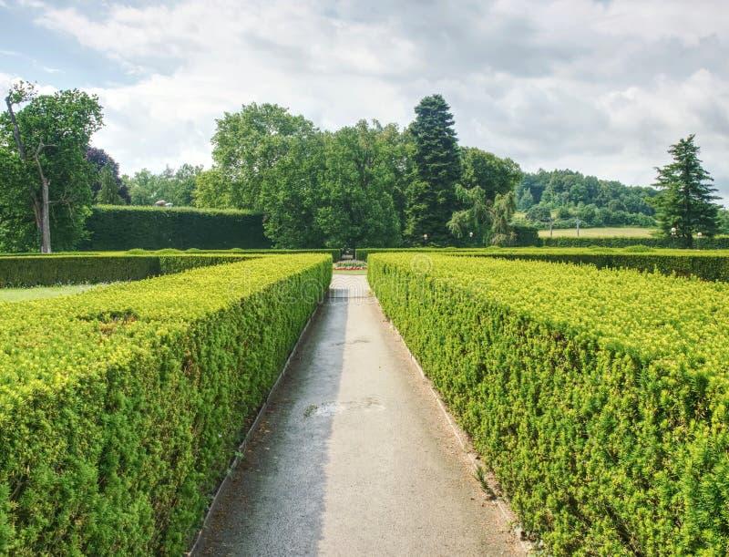 庭院迷宫的细节,树篱黄杨属新的春天射击 库存照片