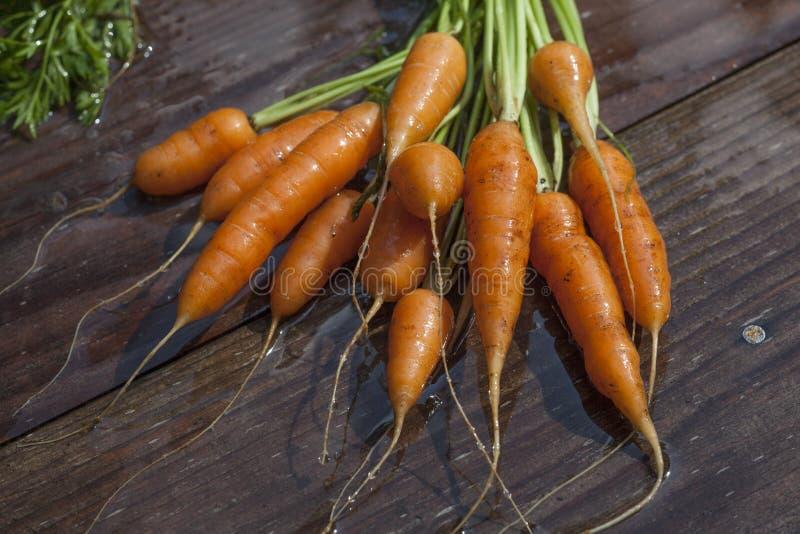 庭院Carrots_1530 免版税库存照片