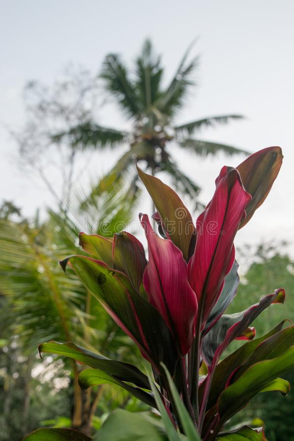 庭院exotique巴厘岛 免版税库存图片