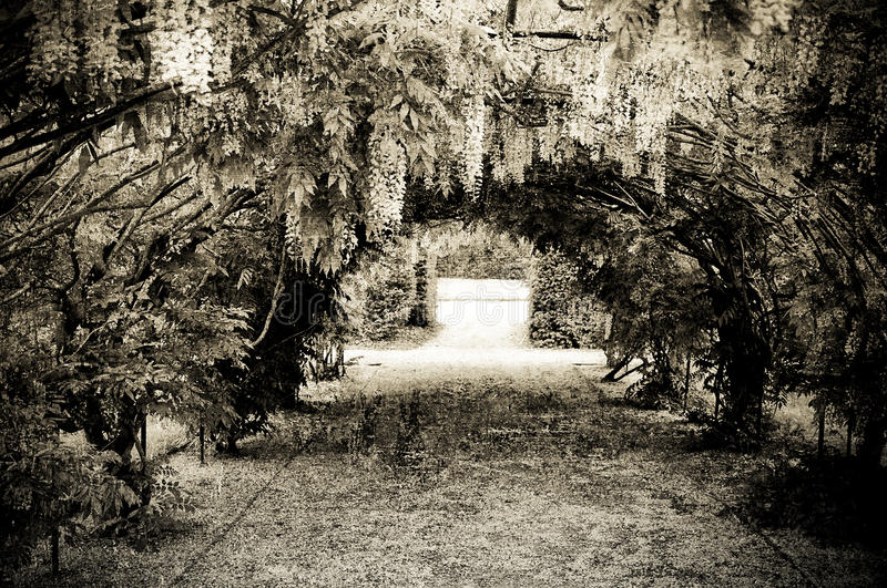 庭院grunge 免版税图库摄影
