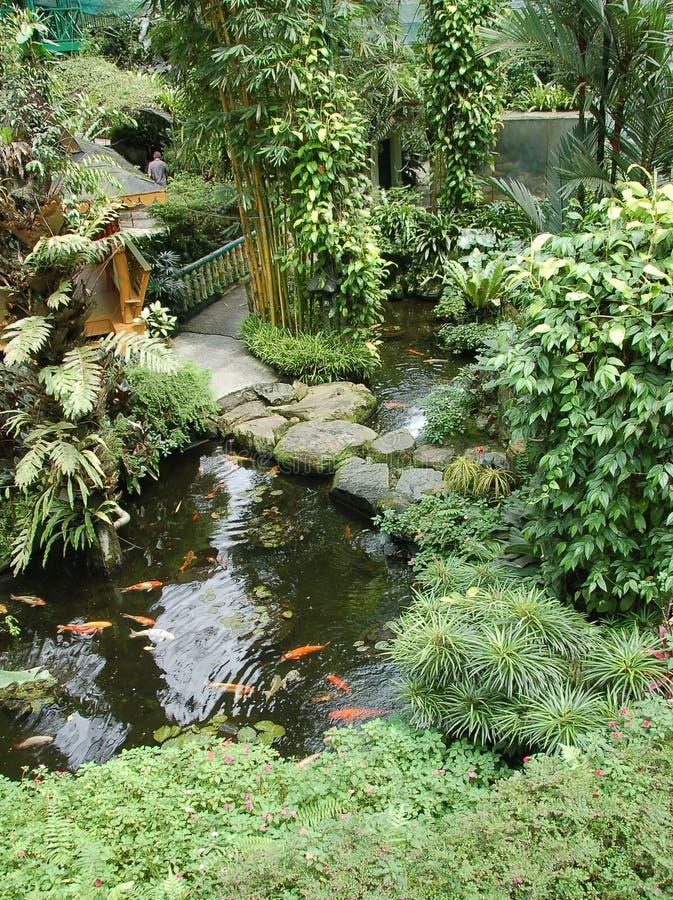庭院koi ponds2 免版税库存照片