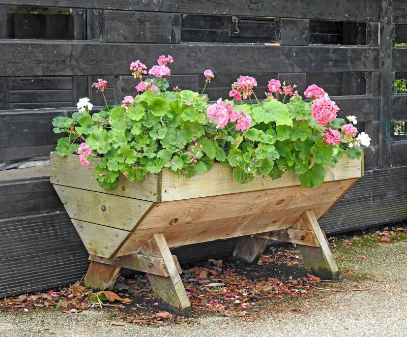 庭院trug容器显示小露台罐的花植物 免版税库存照片