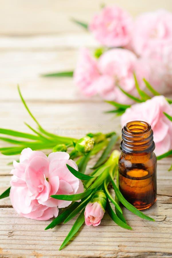 康乃馨绝对精油和桃红色花在木桌上 免版税库存图片