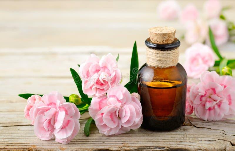 康乃馨绝对精油和桃红色花在木桌上 库存图片