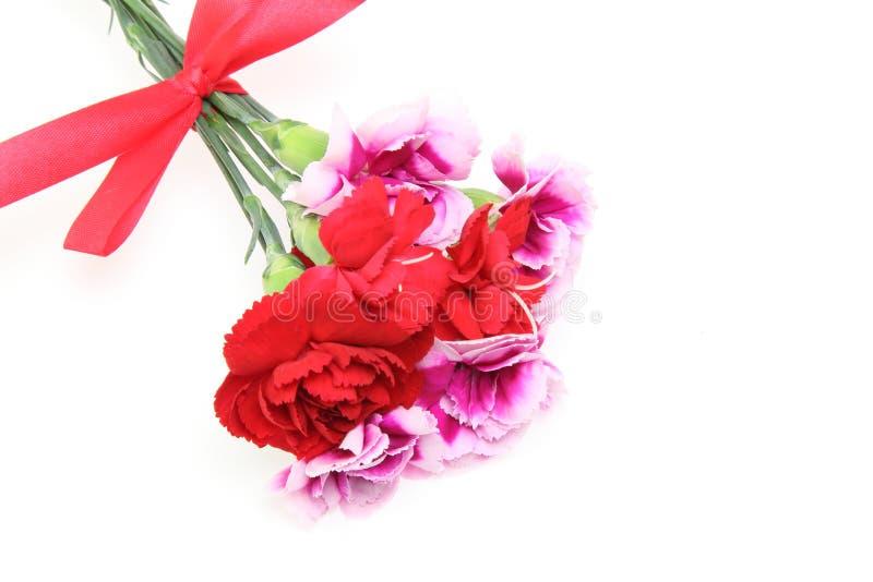 Download 康乃馨花束与丝带的 库存图片. 图片 包括有 花束, 谢谢, 红色, 生动, 母亲, 丝带, 粉红色, 射击 - 72367777