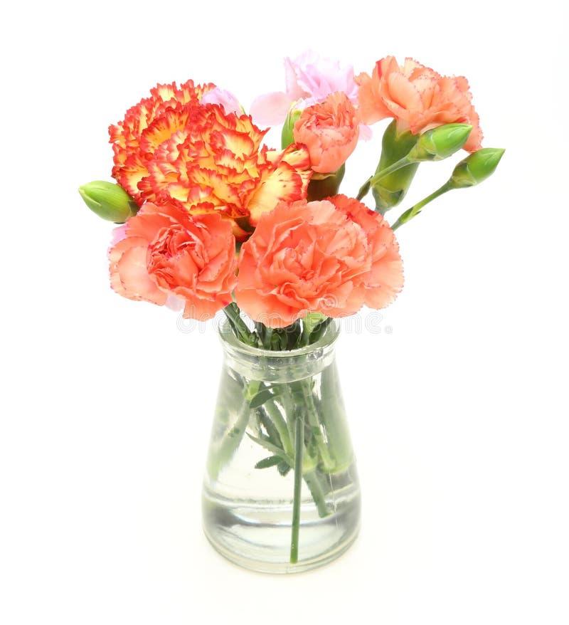 康乃馨花束和在一个玻璃瓶上升了 库存照片