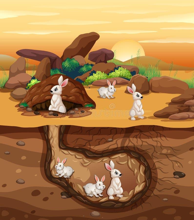 开掘孔的兔子 向量例证