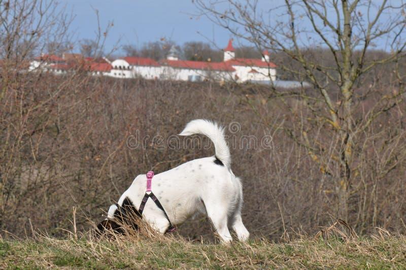 开掘孔的狗 库存图片
