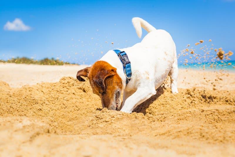 开掘孔的狗 免版税库存图片