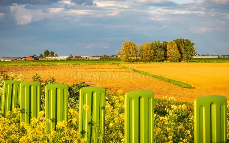 开放农业草土地在荷兰 库存照片