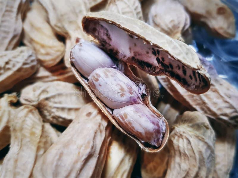 开放壳与选择聚焦的煮沸的花生 图库摄影