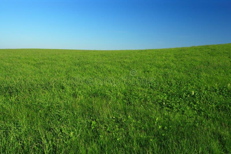 Download 开放的域 库存照片. 图片 包括有 草甸, 蓝色, 季节, 田园诗, 室外, 牧场地, 梦想, 春天, 晴朗 - 3664288