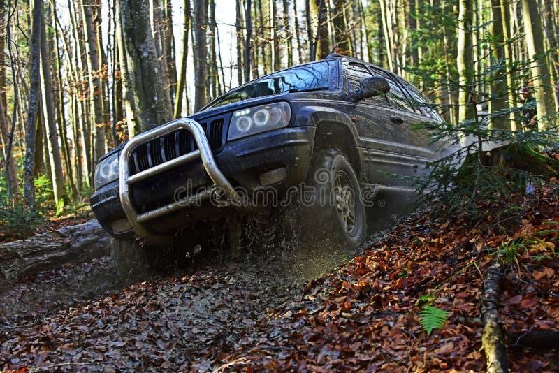开汽车赛跑在秋天自然背景的秋天森林越野种族 越野车或SUV克服障碍 免版税库存图片