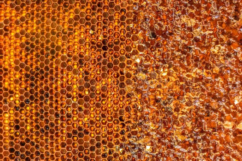 开盖的蜂窝用蜂蜜 免版税库存图片