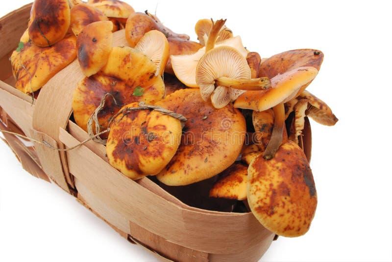 开胃新鲜的蘑菇 免版税图库摄影