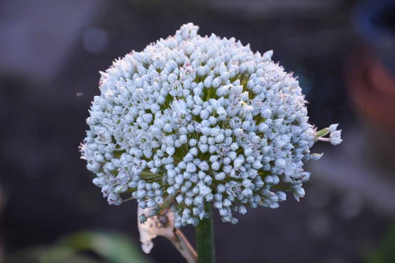 开花与小的白花的联合植物在中间夏天 库存图片