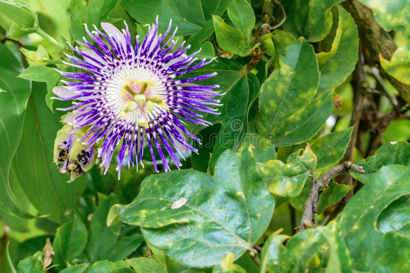 开花与绿色叶子的一点野花 免版税库存照片