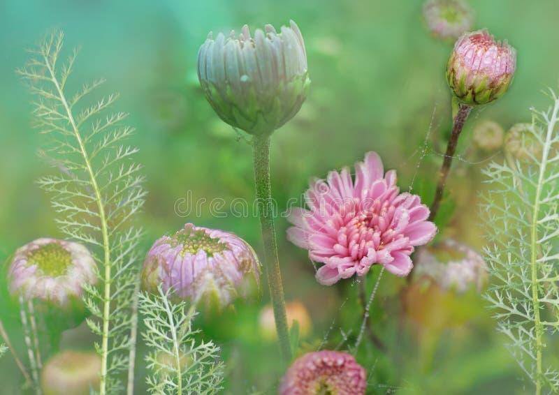 开花与菊花,并且欧蓍草,花卉草甸,种植装饰背景,柔和和易碎的花卉例证,花卉a 库存图片