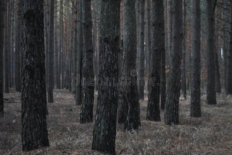 开花具球果夜间开花河小的木头 免版税图库摄影