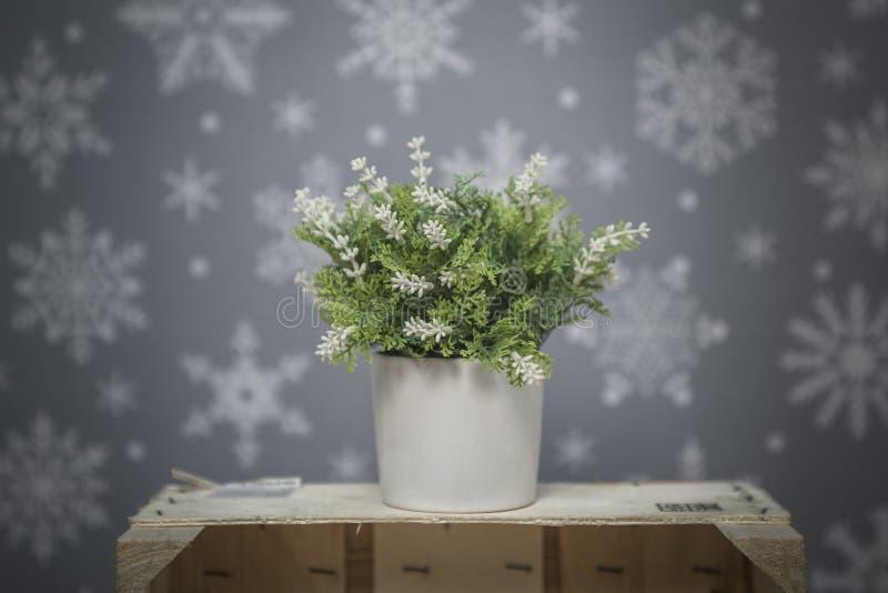 开花在与白色雪花的灰色背景 库存图片