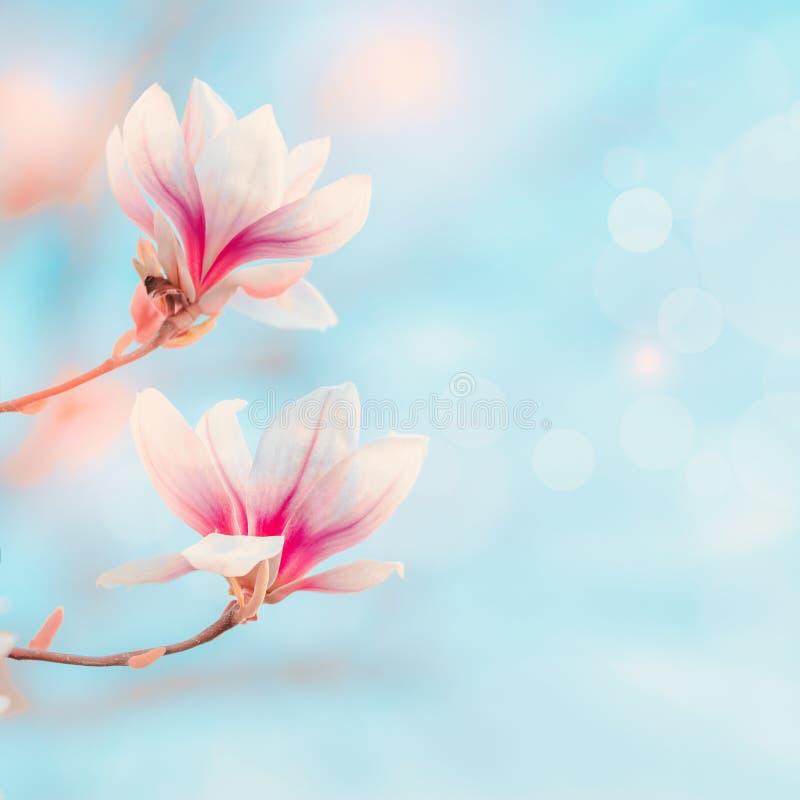 开花在与bokeh和阳光的天空蔚蓝的木兰 春天自然背景春天室外概念 木兰树开花 免版税库存照片