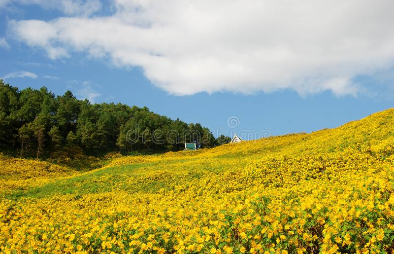 泰国山�^_狂放的向日葵和野营在mae洪sorn,泰国的山