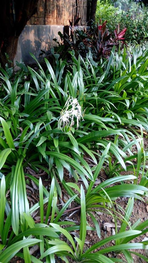 开花在庭院里的鲜花在春天期间 免版税库存照片