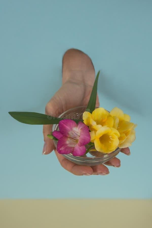 开花在玻璃碗的小苍兰由少数妇女举行了 库存照片