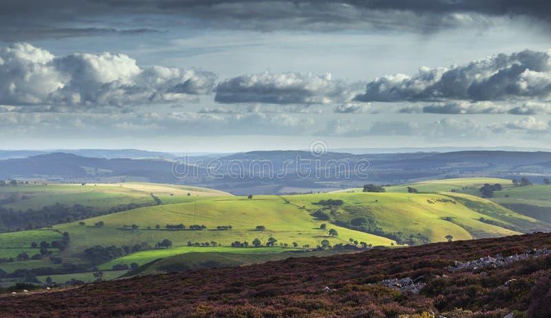 开花在萨罗普郡小山的石南花山地,英国 免版税图库摄影