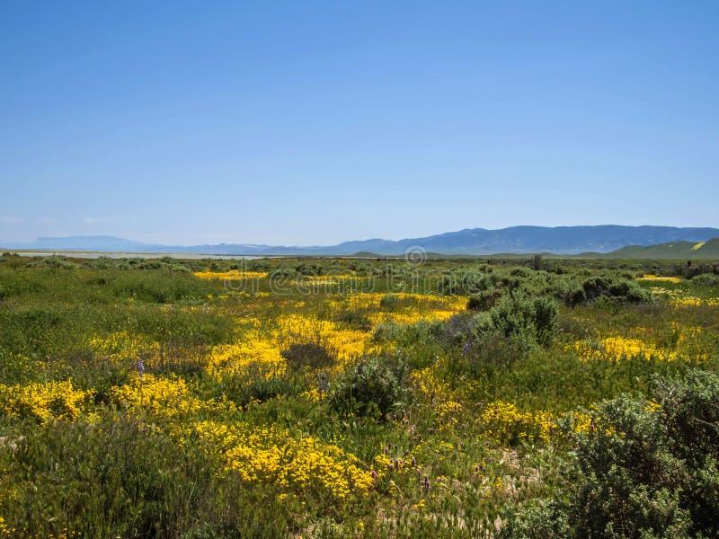 开花在谷的春天的野花领域 免版税库存照片