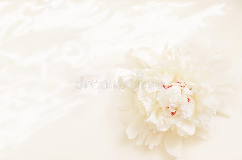 开花在轻的背景的牡丹与样式 库存图片