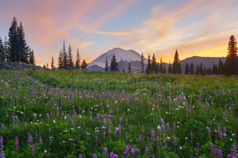 开花在Tipsoo湖, Mt的野花 更加多雨 库存照片