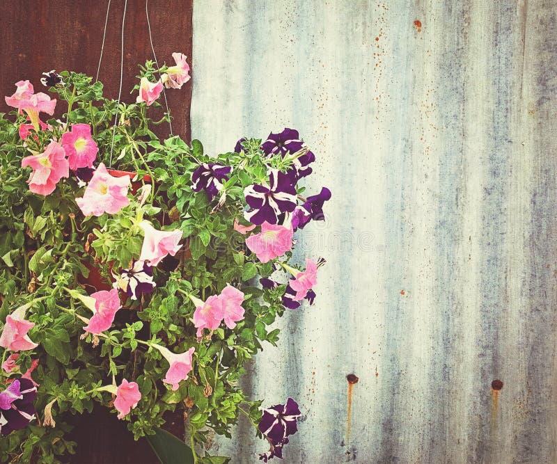 开花并且使篱芭成波状 库存图片