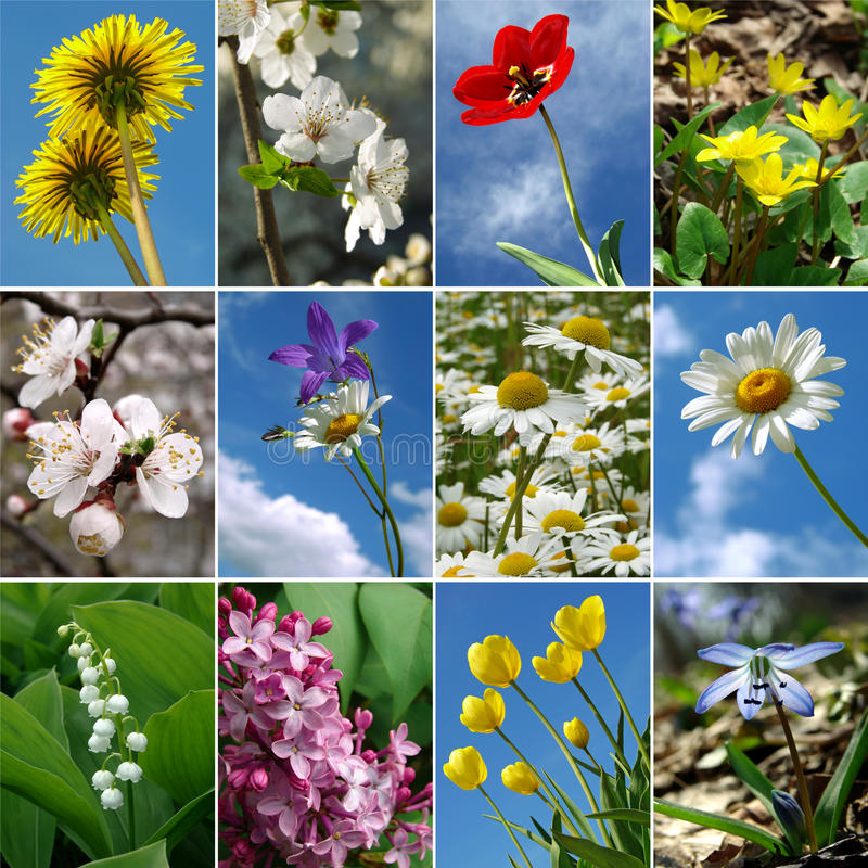 开花收集 免版税图库摄影