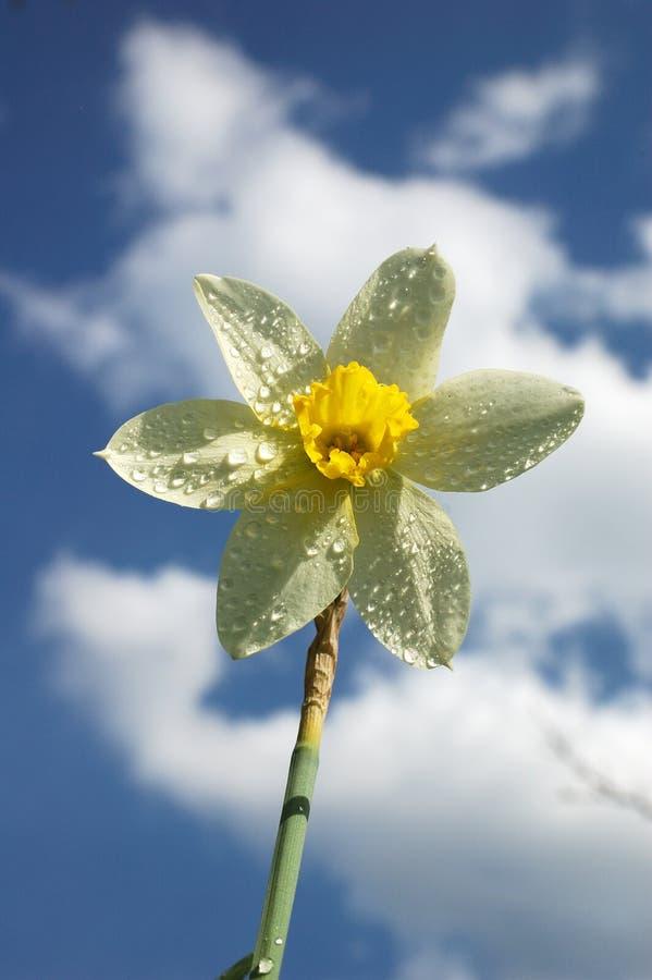 开花明亮的晴朗的夏日。 库存照片