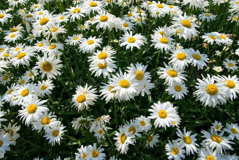 开花明亮的晴朗的夏日。 免版税库存图片