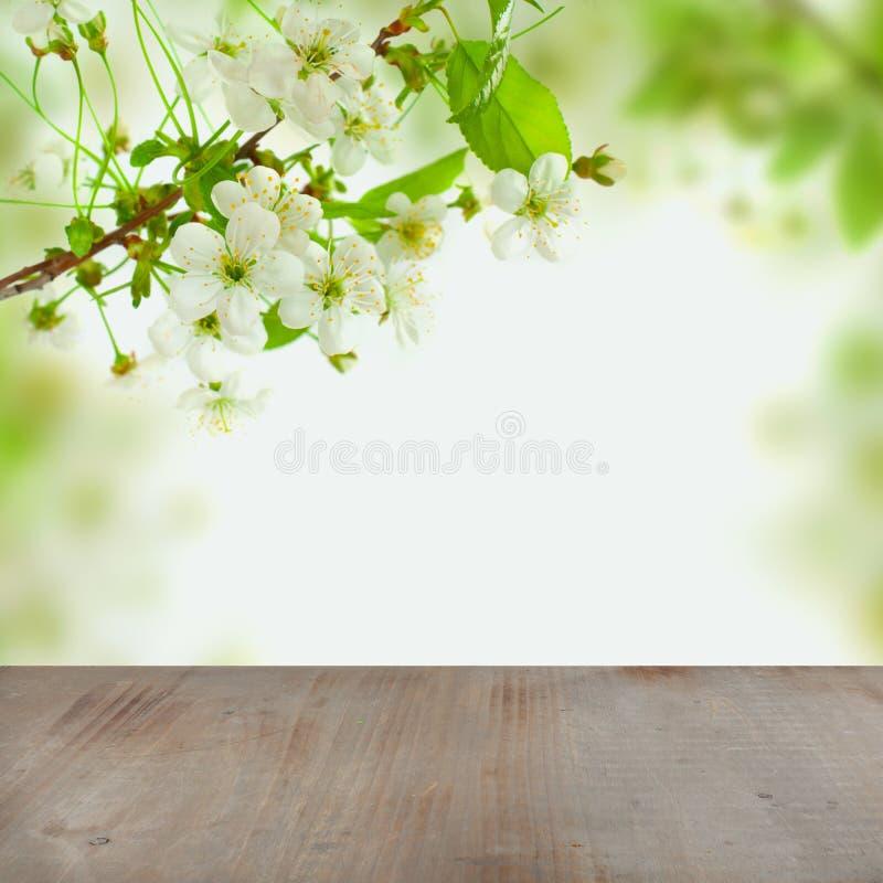 开花春天与白色樱桃树花的早晨背景 免版税库存照片