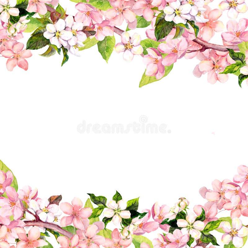 开花桃红色佐仓花 花卉卡片或空白 水彩 向量例证