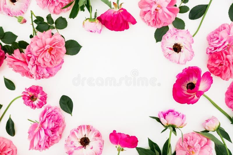开花桃红色玫瑰和银莲花属花框架在白色背景 平的位置,顶视图 淡色花纹理 免版税库存图片