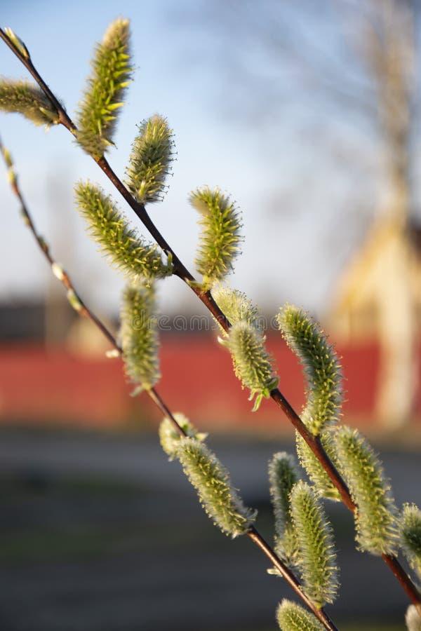 开花植物是新的生活的标志 免版税库存照片