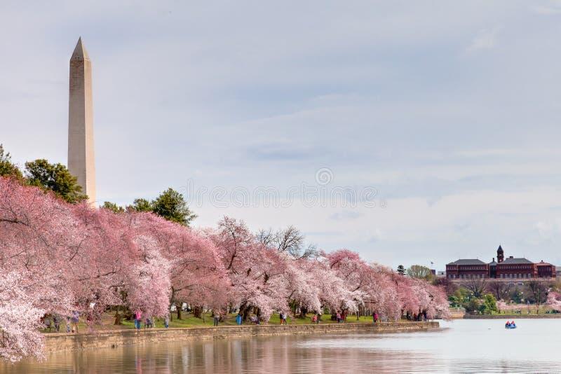 开花樱桃节日纪念碑华盛顿 免版税库存图片