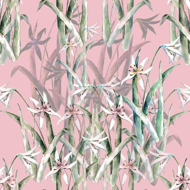 开花水彩百合  在桃红色背景的无缝的样式 向量例证