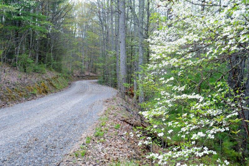 开花沿Smokies的一山路的椋木树 免版税图库摄影