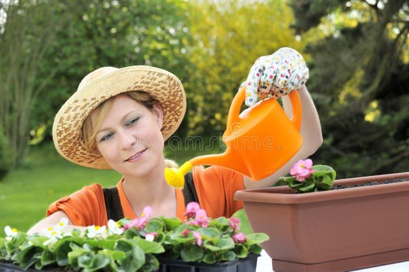 开花浇灌的妇女年轻人 库存图片