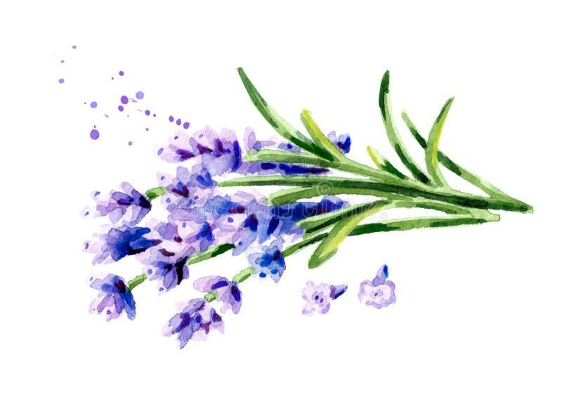开花淡紫色 水彩手拉的例证,隔绝在白色背景 皇族释放例证