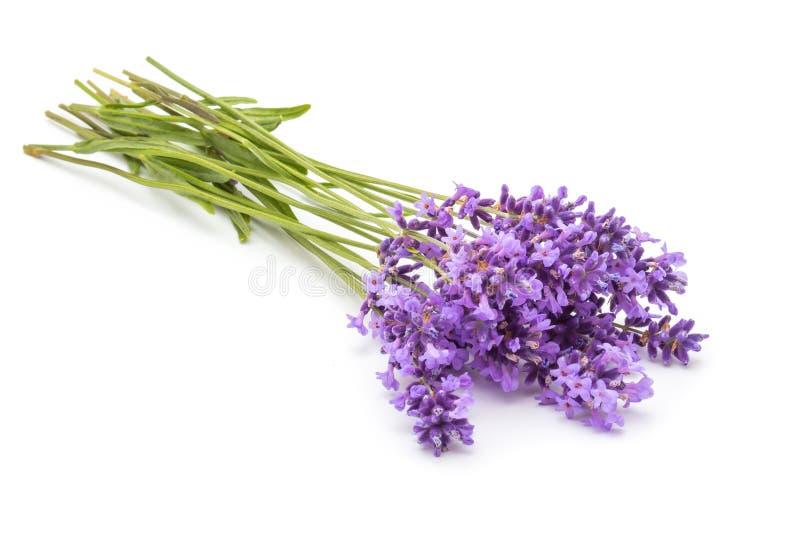 开花淡紫色 免版税库存照片