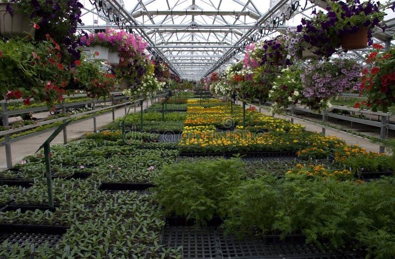 开花温室植物销售额 库存照片